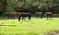 Dedicated resource to reduce animal accidents on roads in the New Forest